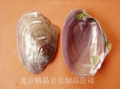 Polished pure shell