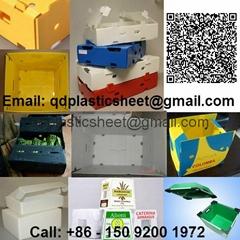 PP Plastic Corrugated Sheet in Polypropylene Corrugated