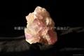 礦物標本.化石