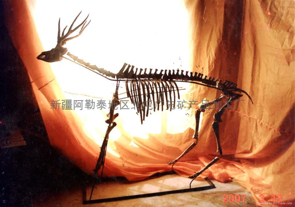 動物化石 1