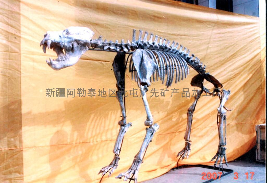 动物化石 1