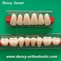 Denxy synthetic resin teeth posteriors