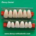 Denxy synthetic resin teeth posteriors resin teeth