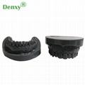 Denxy Dental Study Teeth Model Dental