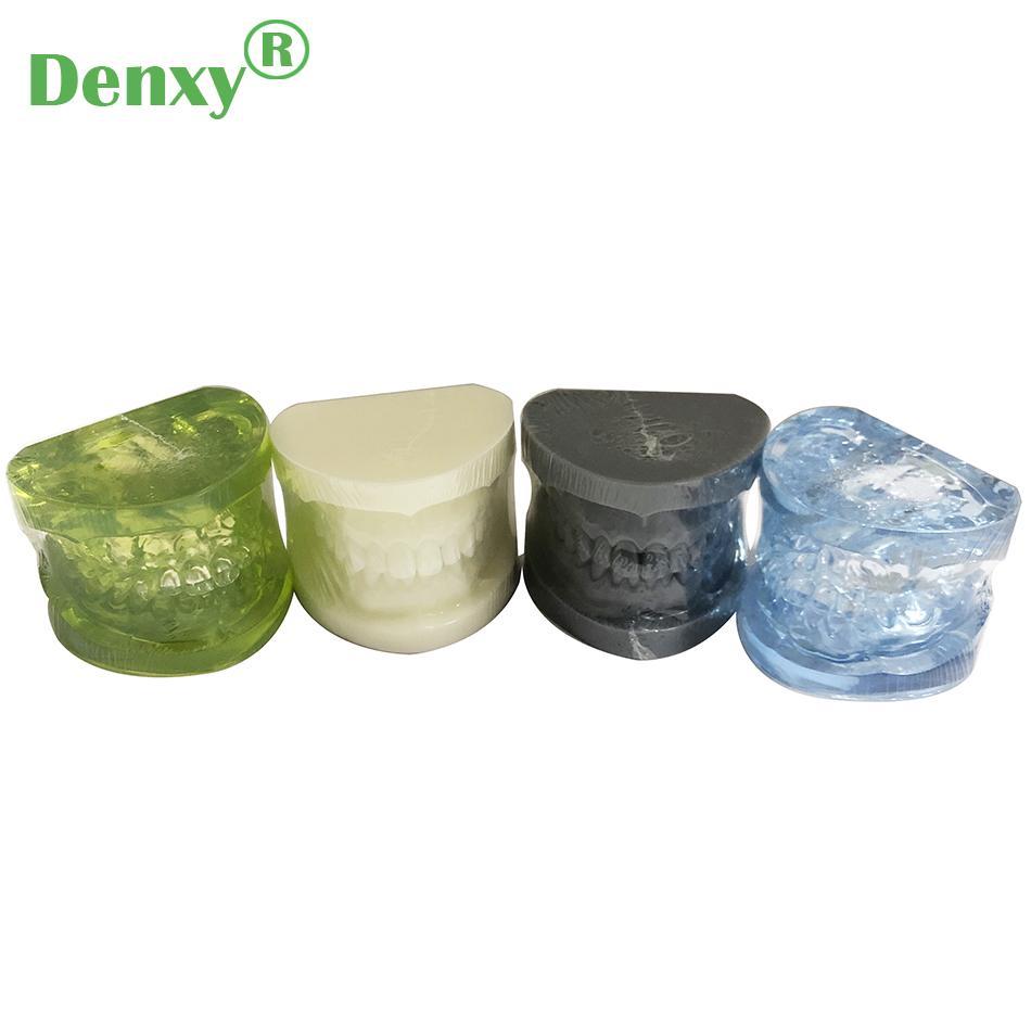 Denxy Dental Study Teeth Model Dental Teeth Model Typodont Dental Equipment 5