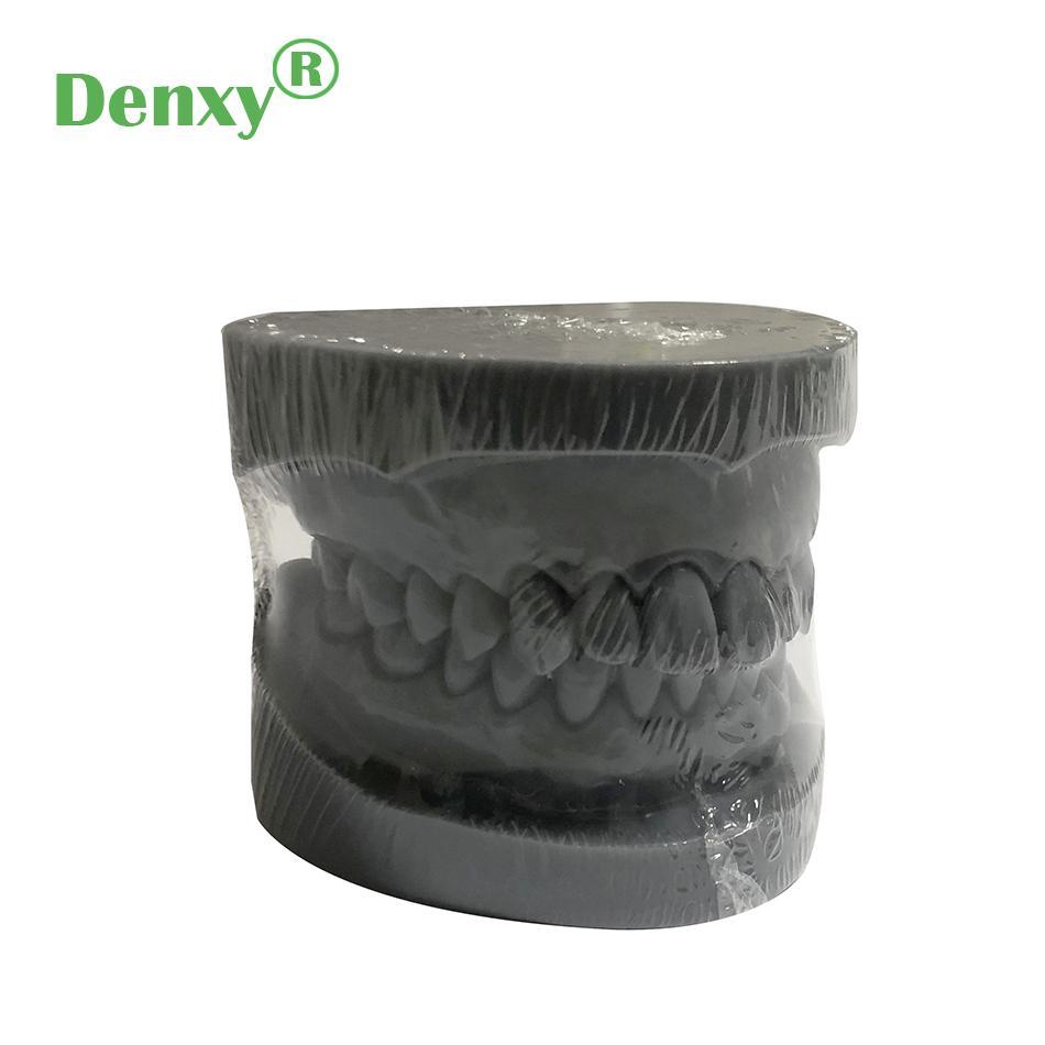 Denxy Dental Study Teeth Model Dental Teeth Model Typodont Dental Equipment 7