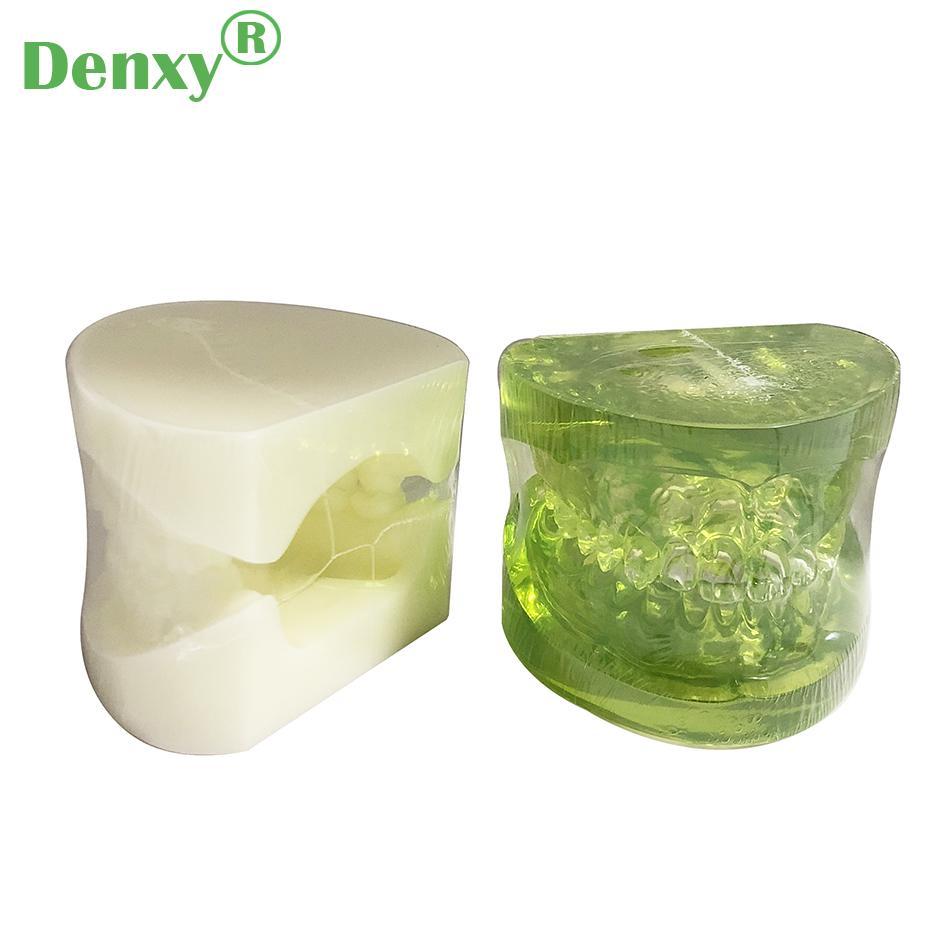 Denxy Dental Study Teeth Model Dental Teeth Model Typodont Dental Equipment 8