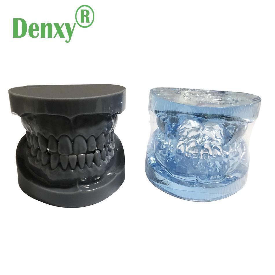 Denxy Dental Study Teeth Model Dental Teeth Model Typodont Dental Equipment 10