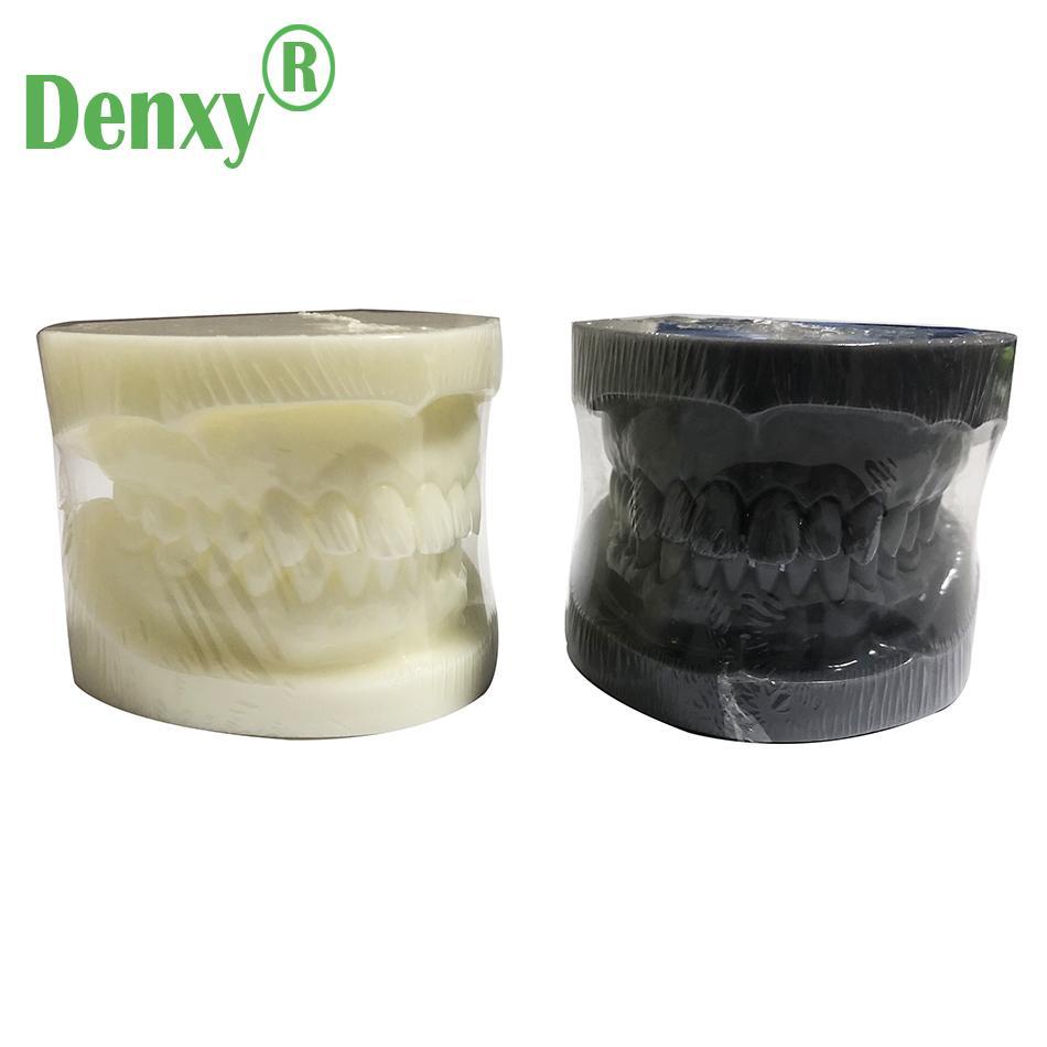 Denxy Dental Study Teeth Model Dental Teeth Model Typodont Dental Equipment 11