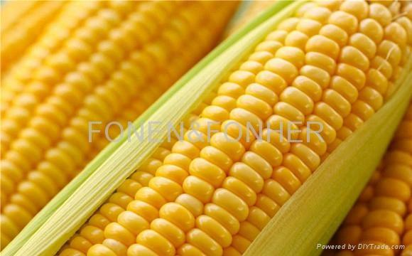 Crude Corn Oil