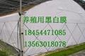 黑白膜養殖膜食用菌大棚膜 5