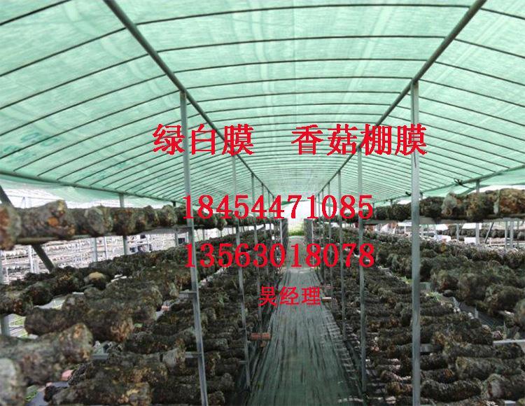 綠白膜食菌種大棚膜香菇膜 1