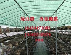 绿白膜食菌种大棚膜香菇膜