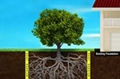 Root Barrier 2