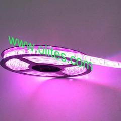 Waterproof Outdoor 3528 SMD Flexible LED Tape Light