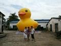 充气大黄鸭,香港大黄鸭,水上大黄鸭,超大闭气大黄鸭 5