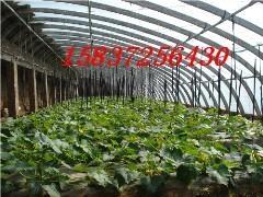 种植养殖花卉大棚骨架