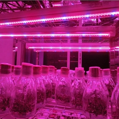 T8 Led grow tube light