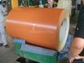 Prepainted Galvanized Steel Sheet 4