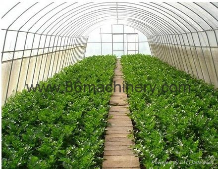 Vegetable Greenhouse 2