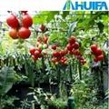 Garden Greenhouse  2