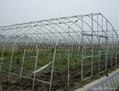 Garden Greenhouse  3