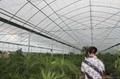 Multi-Span Greenhouse 3