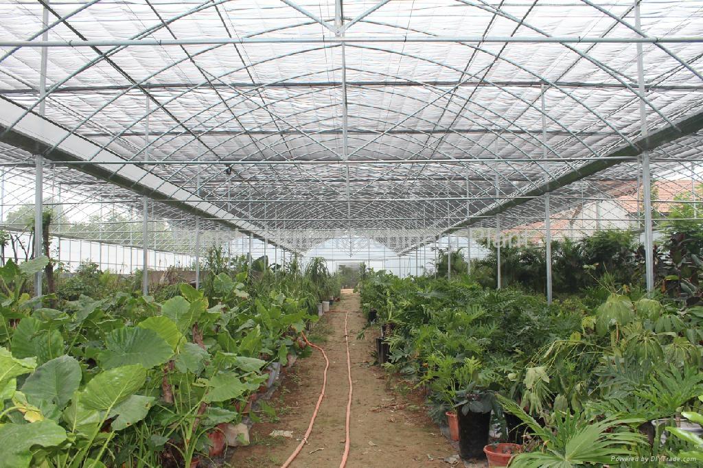 Multi-Span Greenhouse 4