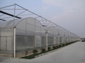 Film Multi Span Greenhouse