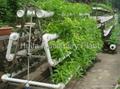 Greenhouse Hydroponics