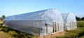 Agricultural Tunnel Film Greenhouse 1