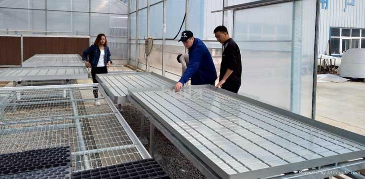 Greenhouse Rolling Bench  3