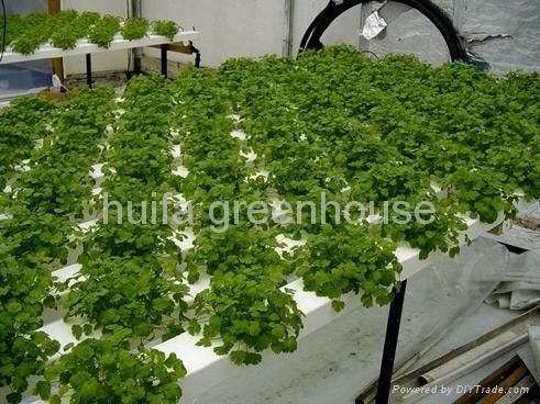Greenhouse Hydroponics 1