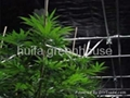 Blackout Greenhouse 3
