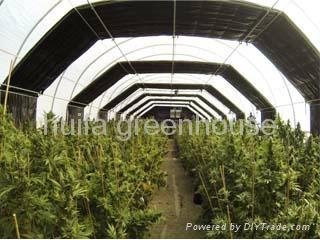 Blackout Greenhouse 1