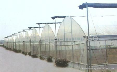 Plastic Film Multi Span Greenhouse 1