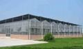 Plastic Film Multi Span Greenhouse
