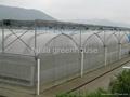 Multi-Span Greenhouse 5