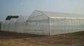 Multi-Span Greenhouse 2