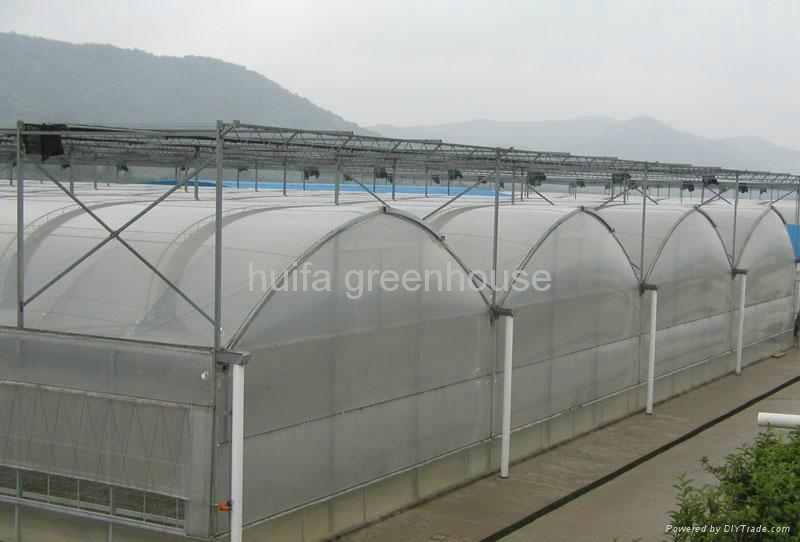 Agriculture Multi Span Greenhouse 2