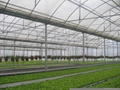 Agriculture Multi Span Greenhouse 4