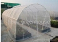 Anti Insect Net Greenhouse