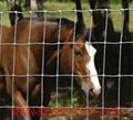 Field mesh fence