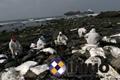 台货轮漏油污染北海岸新络吸油棉应急供应处理现场