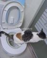 馬桶智能沖便器 家用馬桶升級感應沖洗馬桶 適合老年健忘 寵物 2