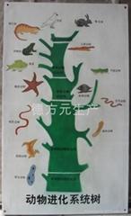 供應動植物進化圖