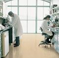 實驗室抗菌地膠