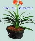 Dongguan ceramic packing quantity stability