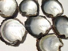 Blacklip Mop Shells