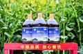 中粮曌福醇香菜籽油 2